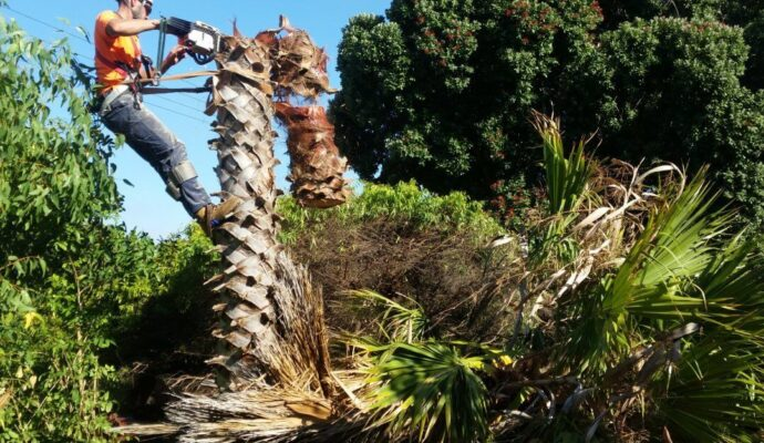 Palm Beach Gardens Tree Trimming and Tree Removal Services Header-We Offer Tree Trimming Services, Tree Removal, Tree Pruning, Tree Cutting, Residential and Commercial Tree Trimming Services, Storm Damage, Emergency Tree Removal, Land Clearing, Tree Companies, Tree Care Service, Stump Grinding, and we're the Best Tree Trimming Company Near You Guaranteed!