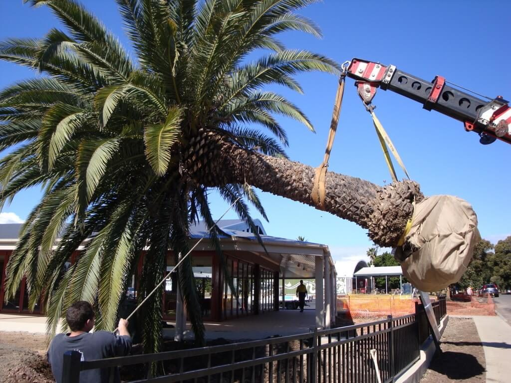 Palm Tree Removal-Palm Beach Gardens Tree Trimming and Tree Removal Services-We Offer Tree Trimming Services, Tree Removal, Tree Pruning, Tree Cutting, Residential and Commercial Tree Trimming Services, Storm Damage, Emergency Tree Removal, Land Clearing, Tree Companies, Tree Care Service, Stump Grinding, and we're the Best Tree Trimming Company Near You Guaranteed!