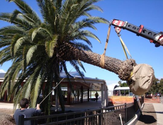 Palm Tree Trimming & Palm Tree Removal-Palm Beach Gardens Tree Trimming and Tree Removal Services-We Offer Tree Trimming Services, Tree Removal, Tree Pruning, Tree Cutting, Residential and Commercial Tree Trimming Services, Storm Damage, Emergency Tree Removal, Land Clearing, Tree Companies, Tree Care Service, Stump Grinding, and we're the Best Tree Trimming Company Near You Guaranteed!