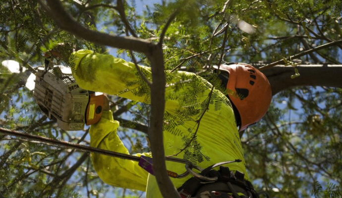Residential Tree Services-Palm Beach Gardens Tree Trimming and Tree Removal Services-We Offer Tree Trimming Services, Tree Removal, Tree Pruning, Tree Cutting, Residential and Commercial Tree Trimming Services, Storm Damage, Emergency Tree Removal, Land Clearing, Tree Companies, Tree Care Service, Stump Grinding, and we're the Best Tree Trimming Company Near You Guaranteed!