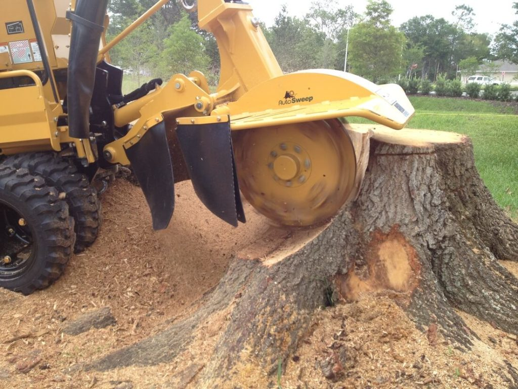 Stump Grinding-Palm Beach Gardens Tree Trimming and Tree Removal Services-We Offer Tree Trimming Services, Tree Removal, Tree Pruning, Tree Cutting, Residential and Commercial Tree Trimming Services, Storm Damage, Emergency Tree Removal, Land Clearing, Tree Companies, Tree Care Service, Stump Grinding, and we're the Best Tree Trimming Company Near You Guaranteed!