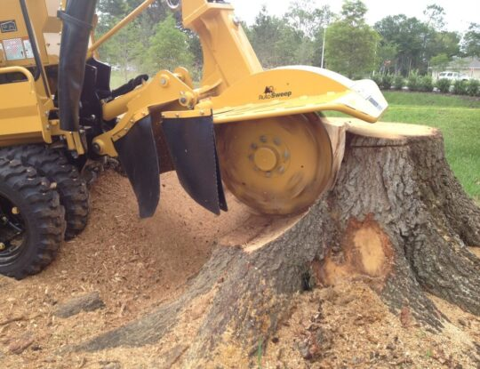 Stump Grinding & Removal-Palm Beach Gardens Tree Trimming and Tree Removal Services-We Offer Tree Trimming Services, Tree Removal, Tree Pruning, Tree Cutting, Residential and Commercial Tree Trimming Services, Storm Damage, Emergency Tree Removal, Land Clearing, Tree Companies, Tree Care Service, Stump Grinding, and we're the Best Tree Trimming Company Near You Guaranteed!