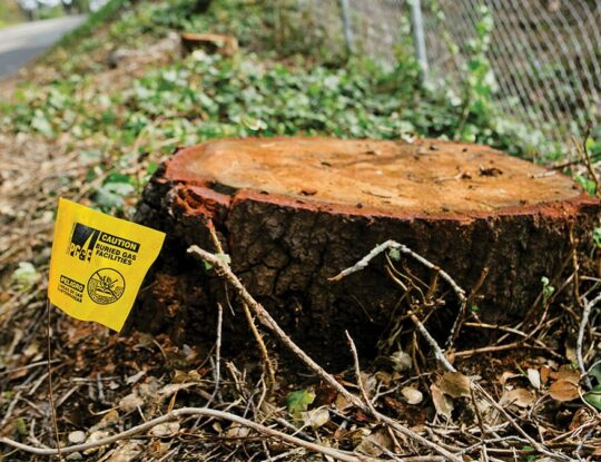 Stump Removal-Palm Beach Gardens Tree Trimming and Tree Removal Services-We Offer Tree Trimming Services, Tree Removal, Tree Pruning, Tree Cutting, Residential and Commercial Tree Trimming Services, Storm Damage, Emergency Tree Removal, Land Clearing, Tree Companies, Tree Care Service, Stump Grinding, and we're the Best Tree Trimming Company Near You Guaranteed!