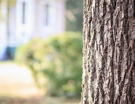 Tree Assessments-Palm Beach Gardens Tree Trimming and Tree Removal Services-We Offer Tree Trimming Services, Tree Removal, Tree Pruning, Tree Cutting, Residential and Commercial Tree Trimming Services, Storm Damage, Emergency Tree Removal, Land Clearing, Tree Companies, Tree Care Service, Stump Grinding, and we're the Best Tree Trimming Company Near You Guaranteed!