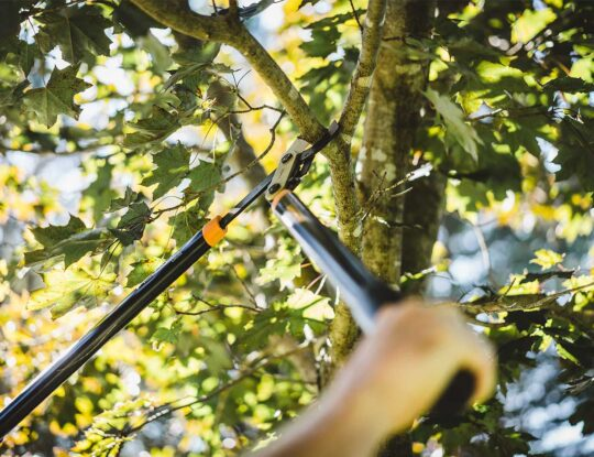 Tree Pruning new-Palm Beach Gardens Tree Trimming and Tree Removal Services-We Offer Tree Trimming Services, Tree Removal, Tree Pruning, Tree Cutting, Residential and Commercial Tree Trimming Services, Storm Damage, Emergency Tree Removal, Land Clearing, Tree Companies, Tree Care Service, Stump Grinding, and we're the Best Tree Trimming Company Near You Guaranteed!