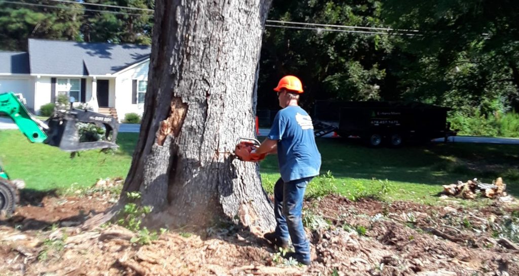 Tree Pruning & Tree Removal-Palm Beach Gardens Tree Trimming and Tree Removal Services-We Offer Tree Trimming Services, Tree Removal, Tree Pruning, Tree Cutting, Residential and Commercial Tree Trimming Services, Storm Damage, Emergency Tree Removal, Land Clearing, Tree Companies, Tree Care Service, Stump Grinding, and we're the Best Tree Trimming Company Near You Guaranteed!