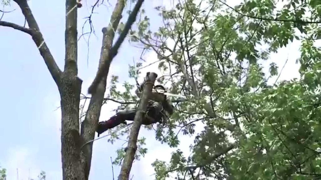 Tree Trimming-Palm Beach Gardens Tree Trimming and Tree Removal Services-We Offer Tree Trimming Services, Tree Removal, Tree Pruning, Tree Cutting, Residential and Commercial Tree Trimming Services, Storm Damage, Emergency Tree Removal, Land Clearing, Tree Companies, Tree Care Service, Stump Grinding, and we're the Best Tree Trimming Company Near You Guaranteed!