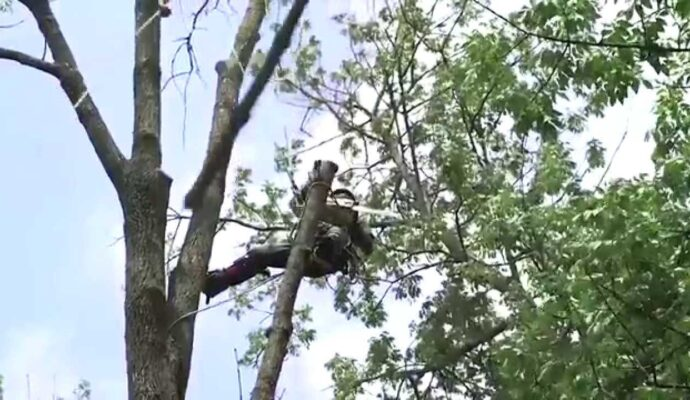 Tree Trimming Services-Palm Beach Gardens Tree Trimming and Tree Removal Services-We Offer Tree Trimming Services, Tree Removal, Tree Pruning, Tree Cutting, Residential and Commercial Tree Trimming Services, Storm Damage, Emergency Tree Removal, Land Clearing, Tree Companies, Tree Care Service, Stump Grinding, and we're the Best Tree Trimming Company Near You Guaranteed!